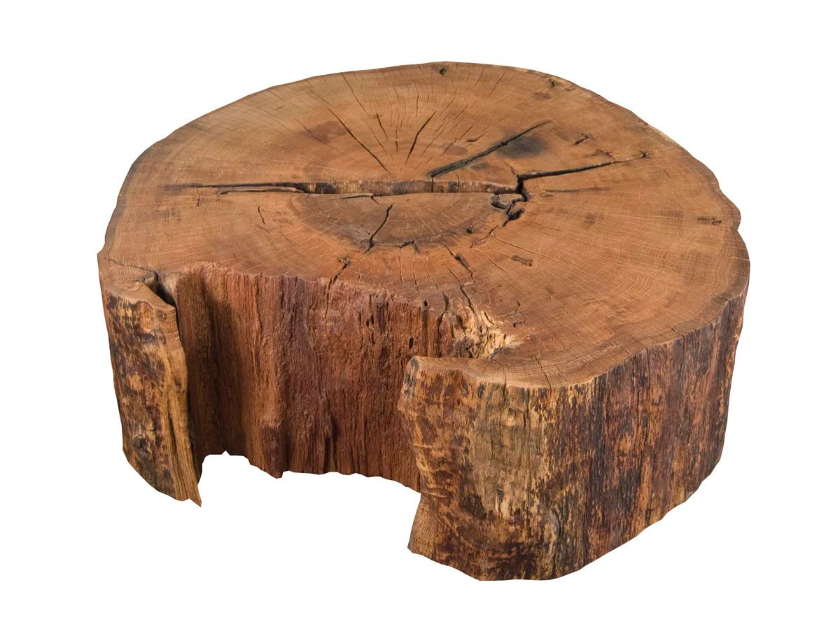 "42"" Dia Red Elm Log by Urban Tree Salvage"