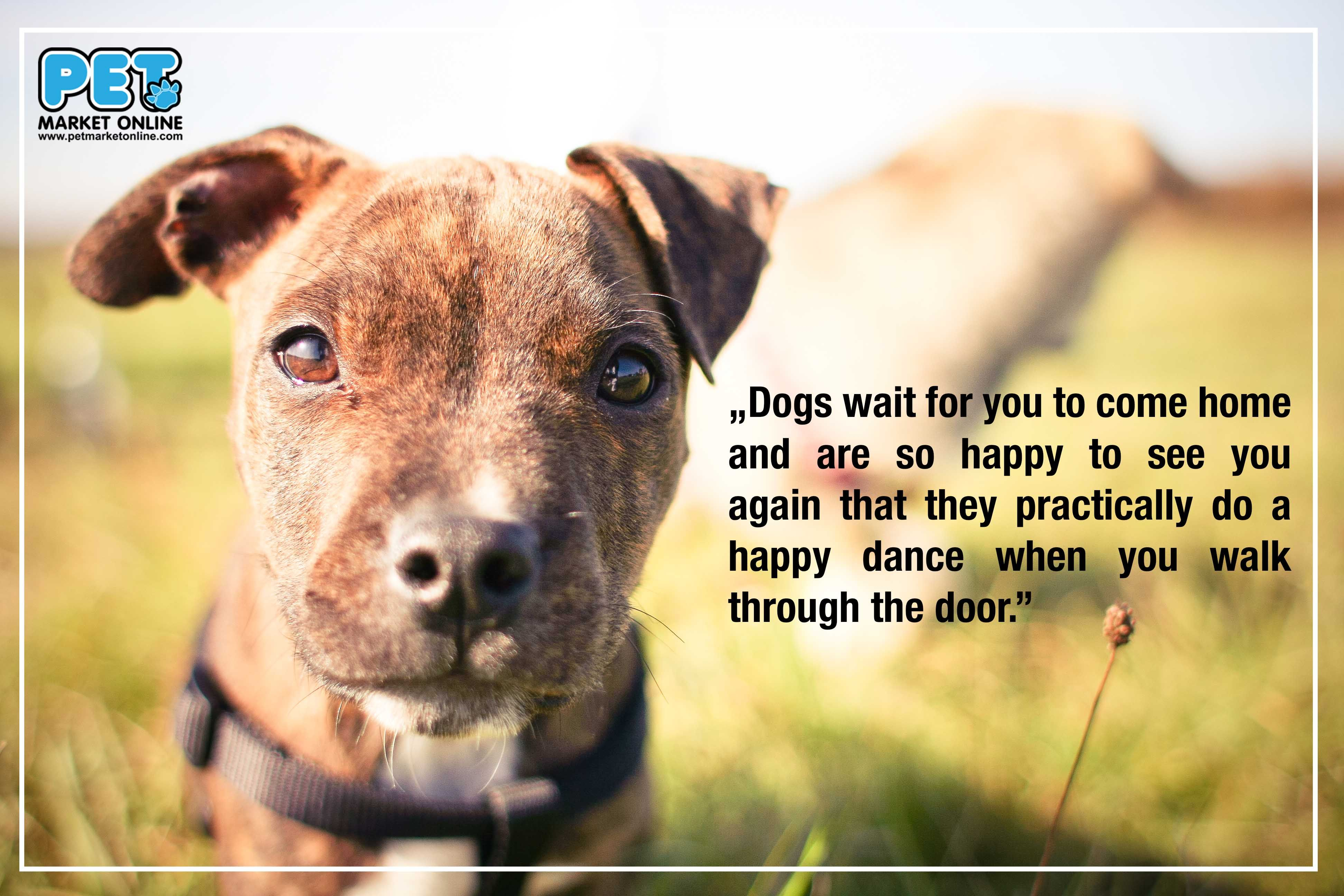 Always Happy To See You Www Petmarketonline Com Quote Dog