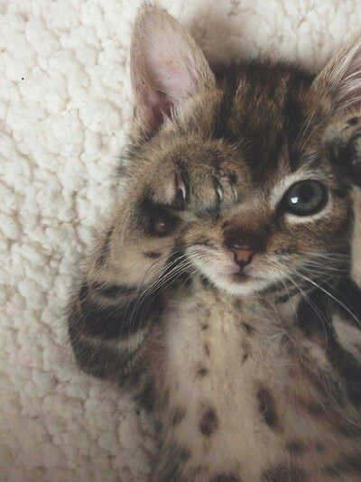 Image via We Heart It https://weheartit.com/entry/141921664 #animals #baby #cat #cute #eyes #kitten #love #photography