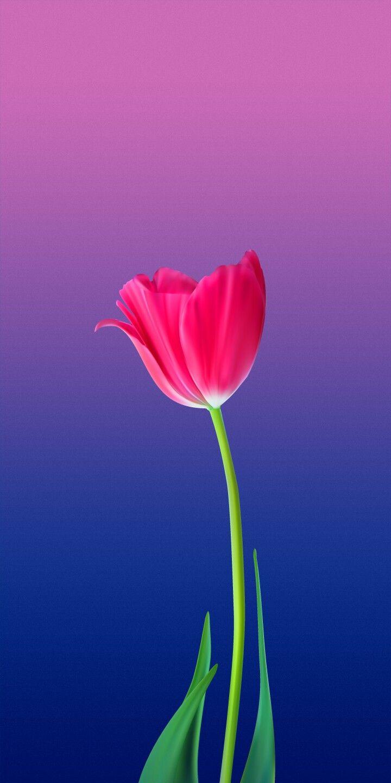 Pin De Iyan Sofyan Em Flowers Pintura De Tulipa Belo Papel De