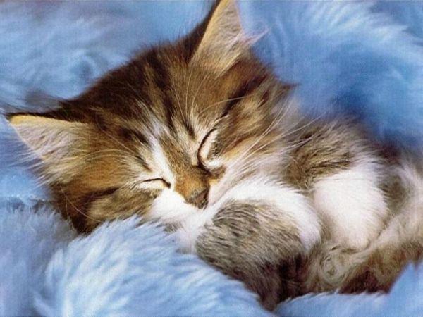 Sleepy Cat Cats Like Sleeping Alot Kittens Cutest Cute Cats Kitten Wallpaper