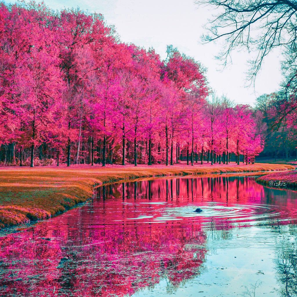 #Edited with #DeluxeFX #app #Pink #Holland
