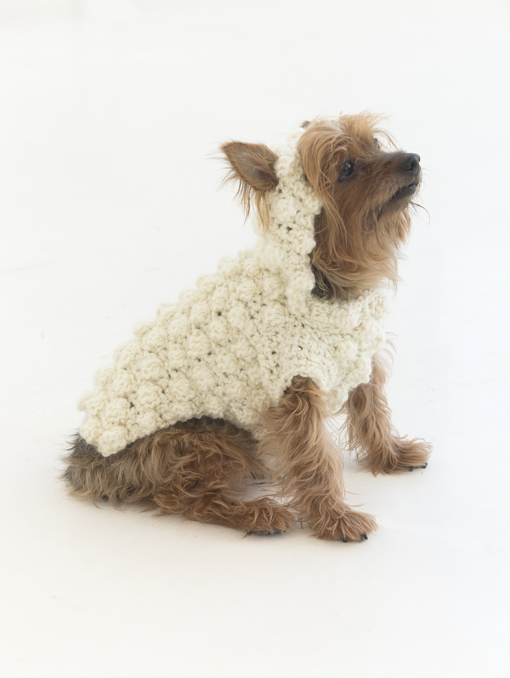 Year of the dog sweater - pet clothes - dog clothes - lion brand ...