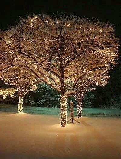 Beautiful Lighting....pretty magical lighting - outside trees (Christmas lights)