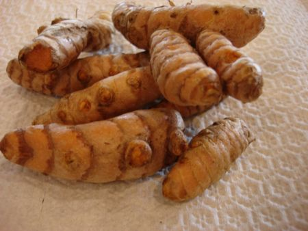 turmeric - how to grow and use for medicinal purposes