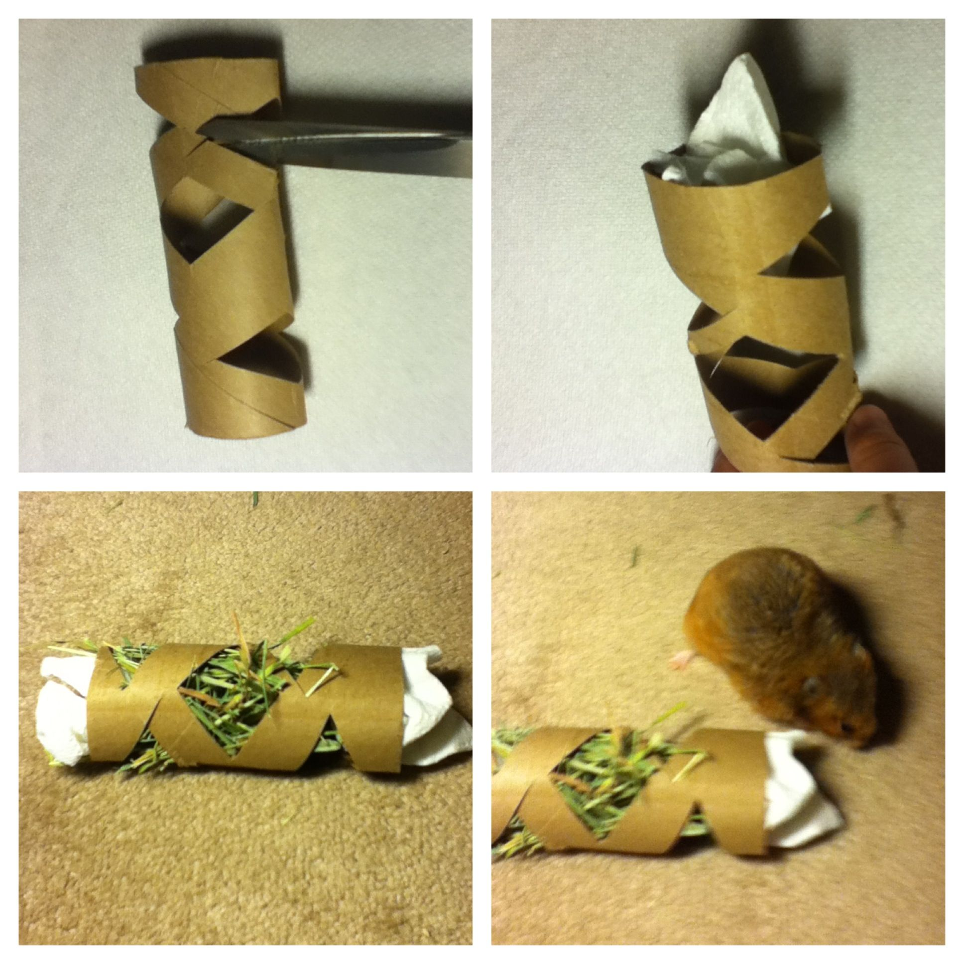 How to make a easy hamster toy you will need a toilet
