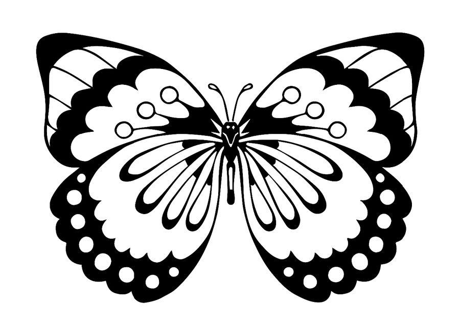 Schmetterling Färbung. Sprechen Sie mit LiveInternet - Russian ...