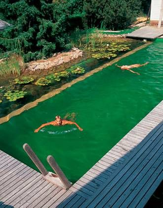 Piscina natural alargada piscina pinterest piscinas for Albercas naturales