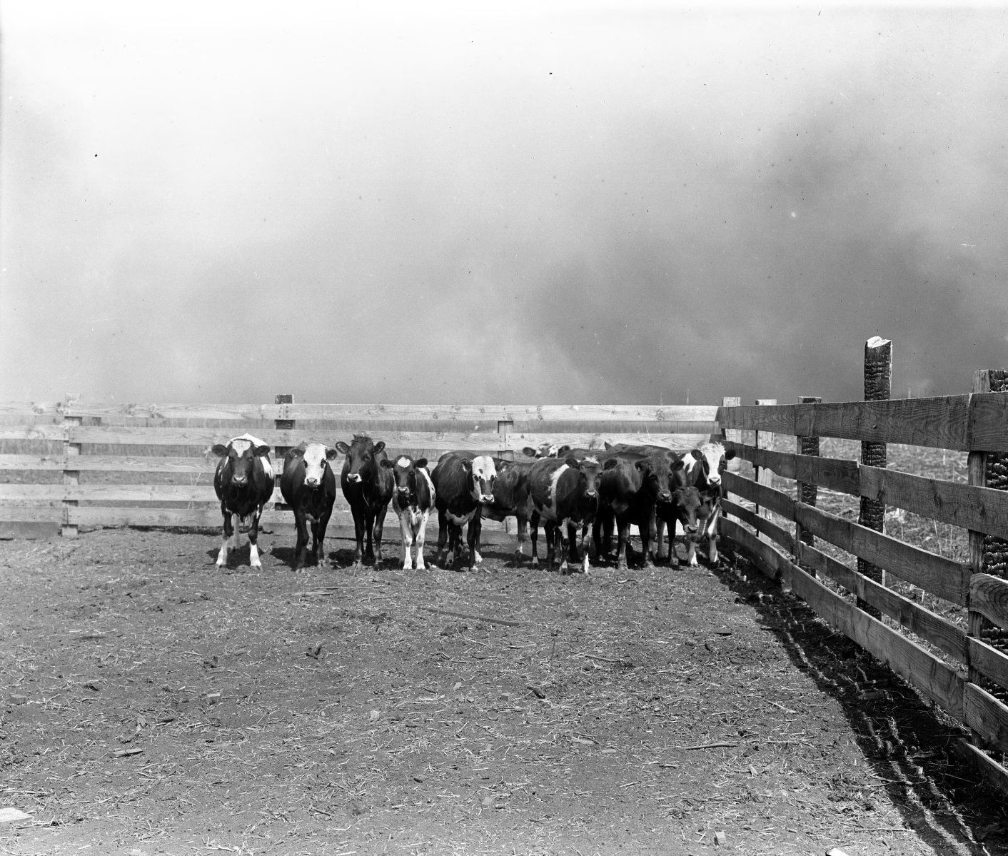 The dust bowl Dust bowl, Great depression photos, Great