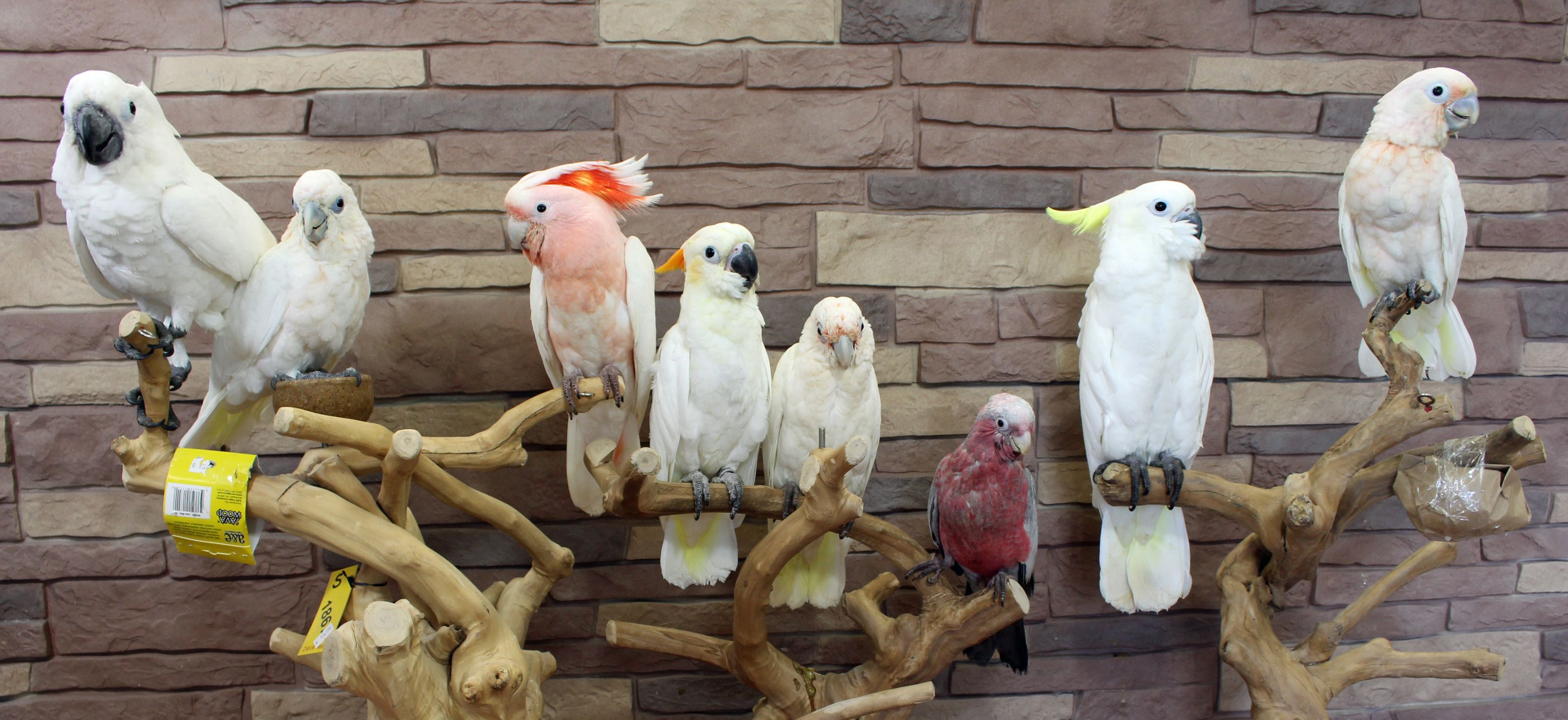 Cockatoo Group Shot (From left to right) Umbrella, Ducorp's