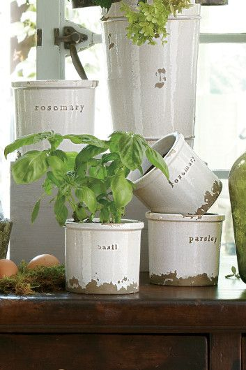 Pottery Herb Pots - Rosemary Herb Pot, Basil Herb Pot, Parley Herb Pot | Soft Surroundings