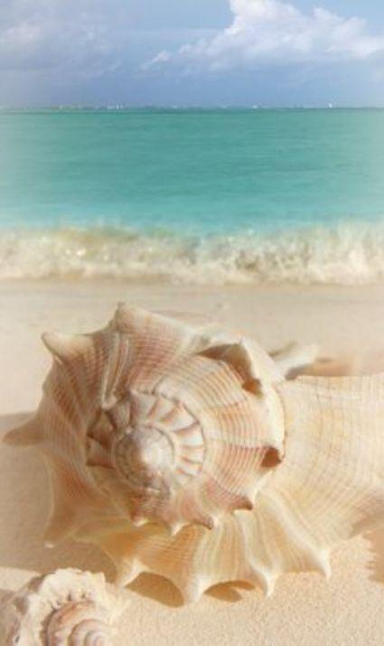pretty pink seashells