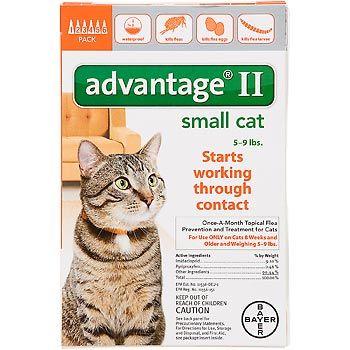 small cat Flea control for cats, Cat fleas, Cat fleas