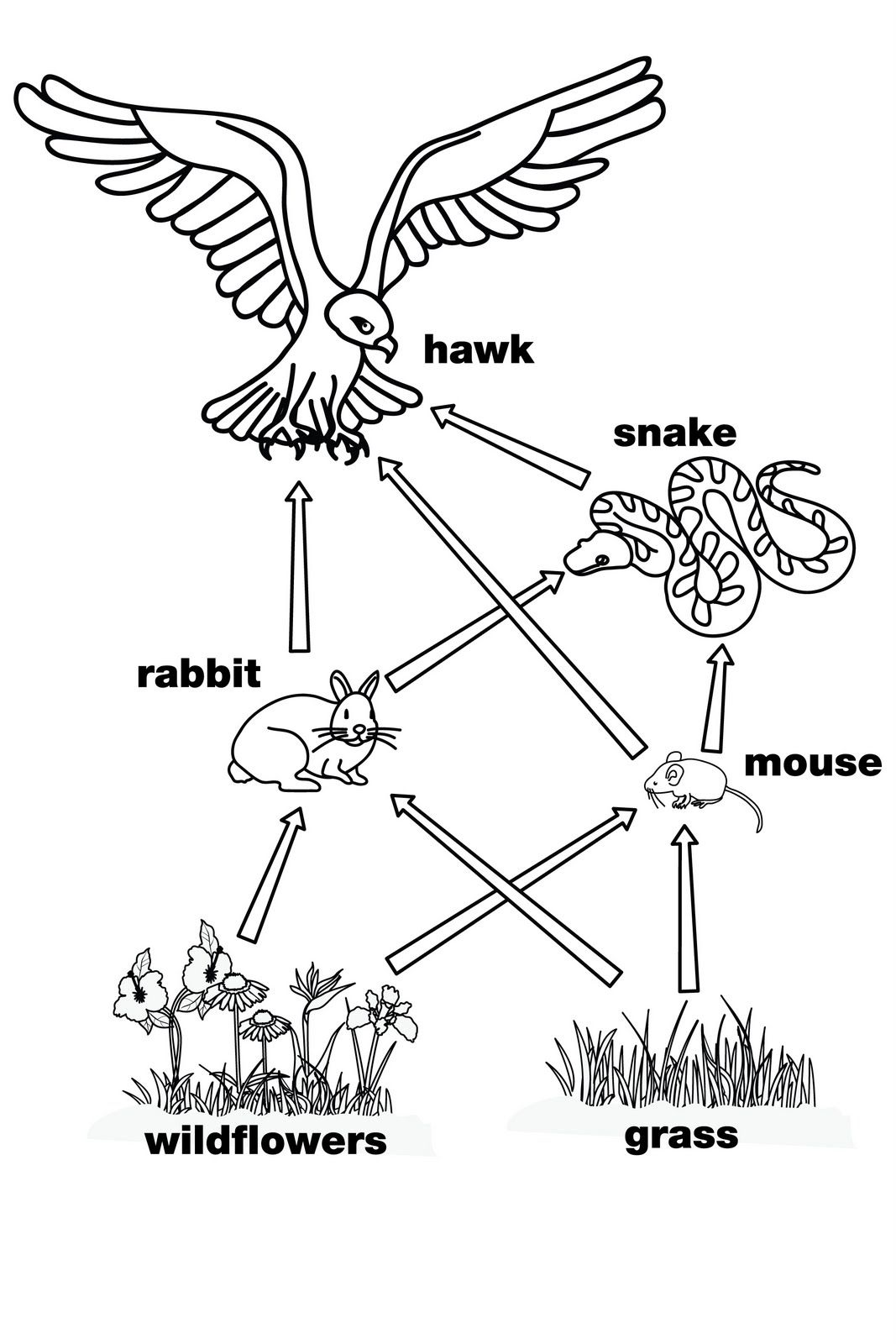 Food Web This Is A Perfect Diagram For The Food Web