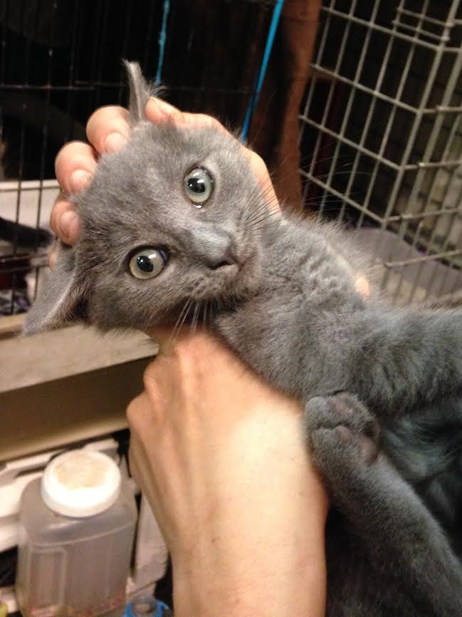 Meet Mia One of our volunteers found this kitten trying