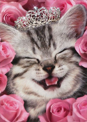 Kitten Face Flowers Tiara Cat Birthday Card Greeting Card By Avanti Press 12615718003 Ebay Cat Birthday Card Pretty Cats Cute Cat Memes
