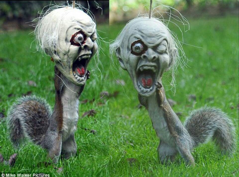Ha Ha Candy In A Zombie Head Squirrel In A Zombie Head