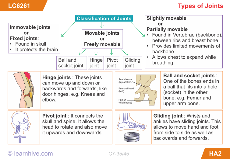 structure of skeletal muscle and locomotion biology essay There is no particular main structure of the muscular system though the one that often first comes to mind is our skeletal muscles - the muscles that give us mobility and strength they are our .