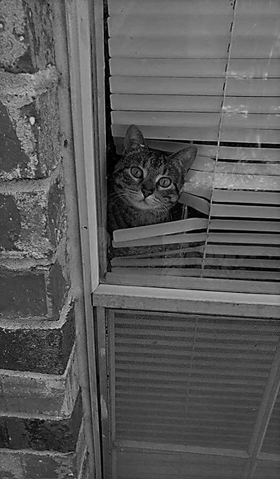 Cats Are Hard On Blinds All Types Of Cat Window Cool