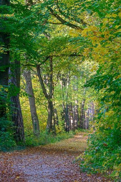 Wald Fotografie - 10 Fotoideen für jede Jahreszeit | FOTONOMADEN.COM