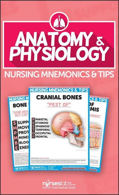Anatomy and Physiology Nursing Mnemonics & Tips | Anatomy and Nurse ...