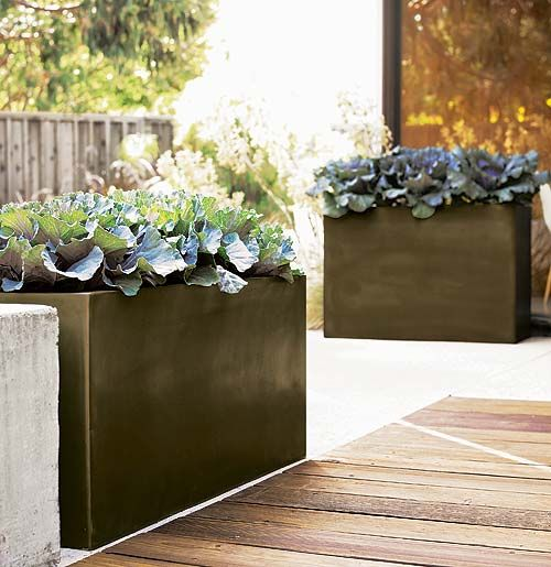 Modern Planters Outdoor Glazed concrete pavers perfect for decorative or edible lettuces glazed concrete pavers perfect for decorative or edible lettuces contemporary plantersmodern workwithnaturefo