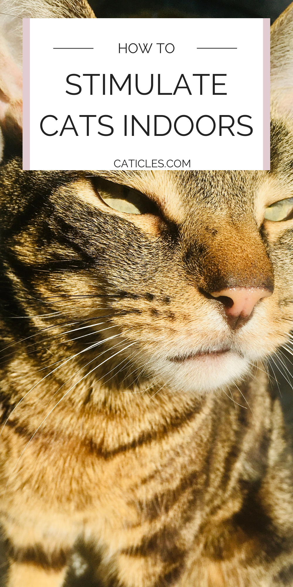 How To Keep A Cat Entertained In An Apartment Pro Tips Cats Cat Life Hacks Cat Care