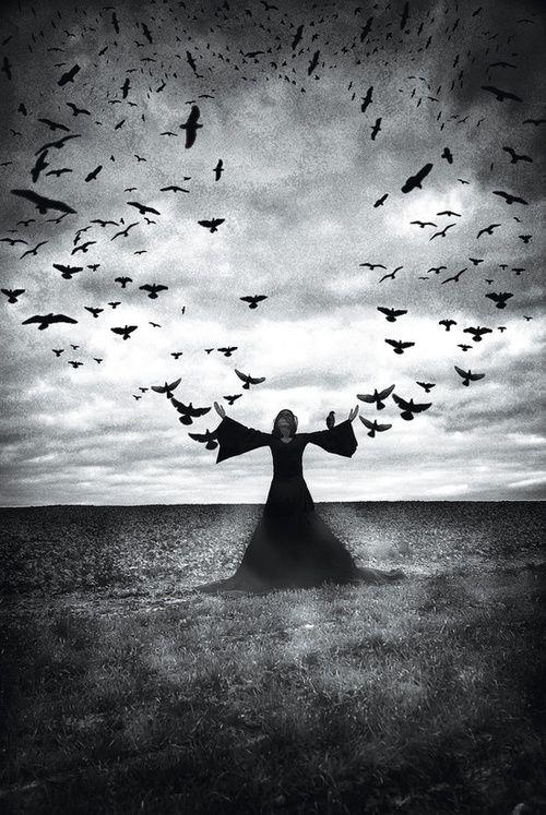ravens | Tumblr