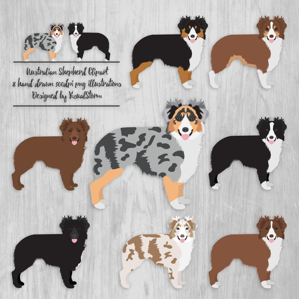 Australian Shepherd Clipart Aussie Illustrations Ranch Dogs Etsy