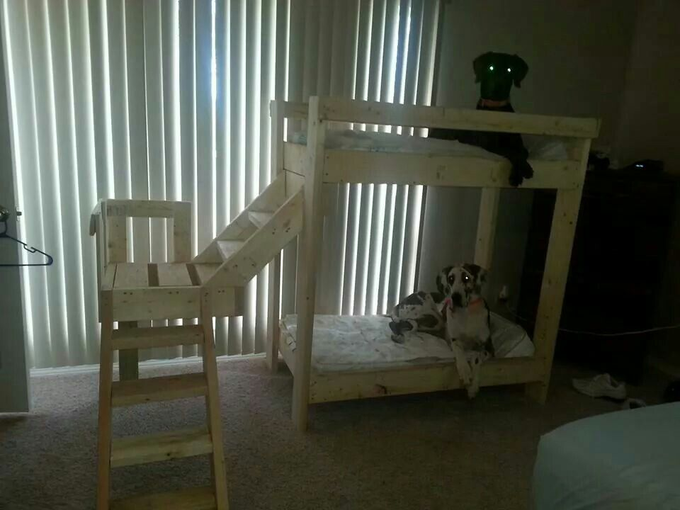 I Think This Is An Awesome Homemade Bunk Bed For Their Great Danes