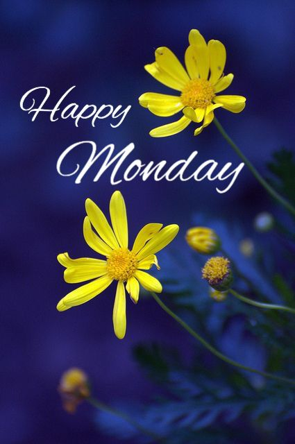 Happy Monday Monday Beautiful Flowers Yellow Daisies