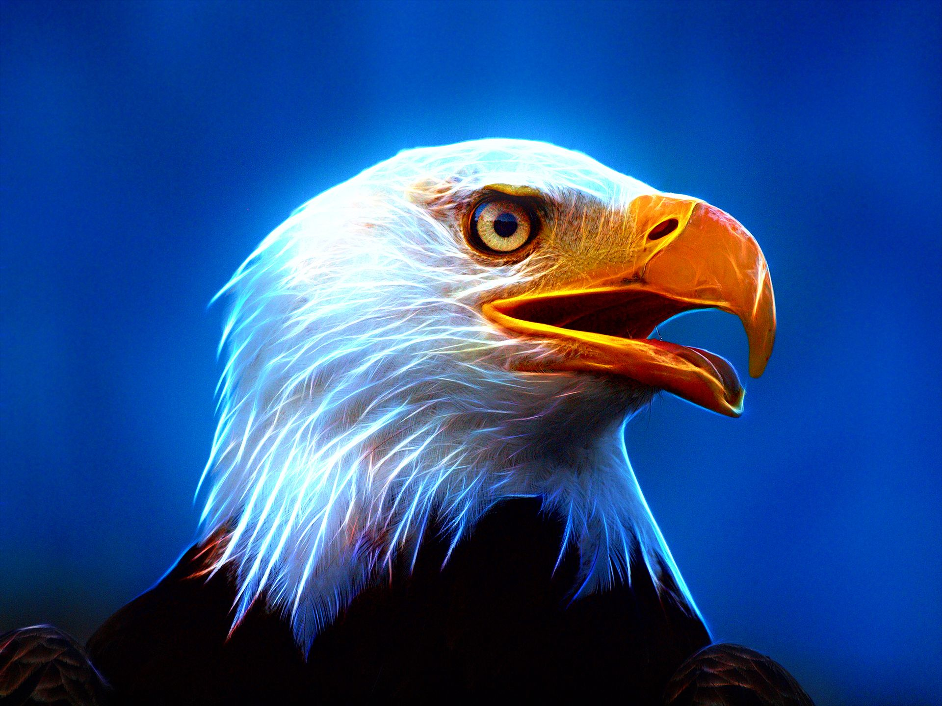 Eagle Wallpapers Download Eagle HD Wallpapers for Free GuoGuiyan