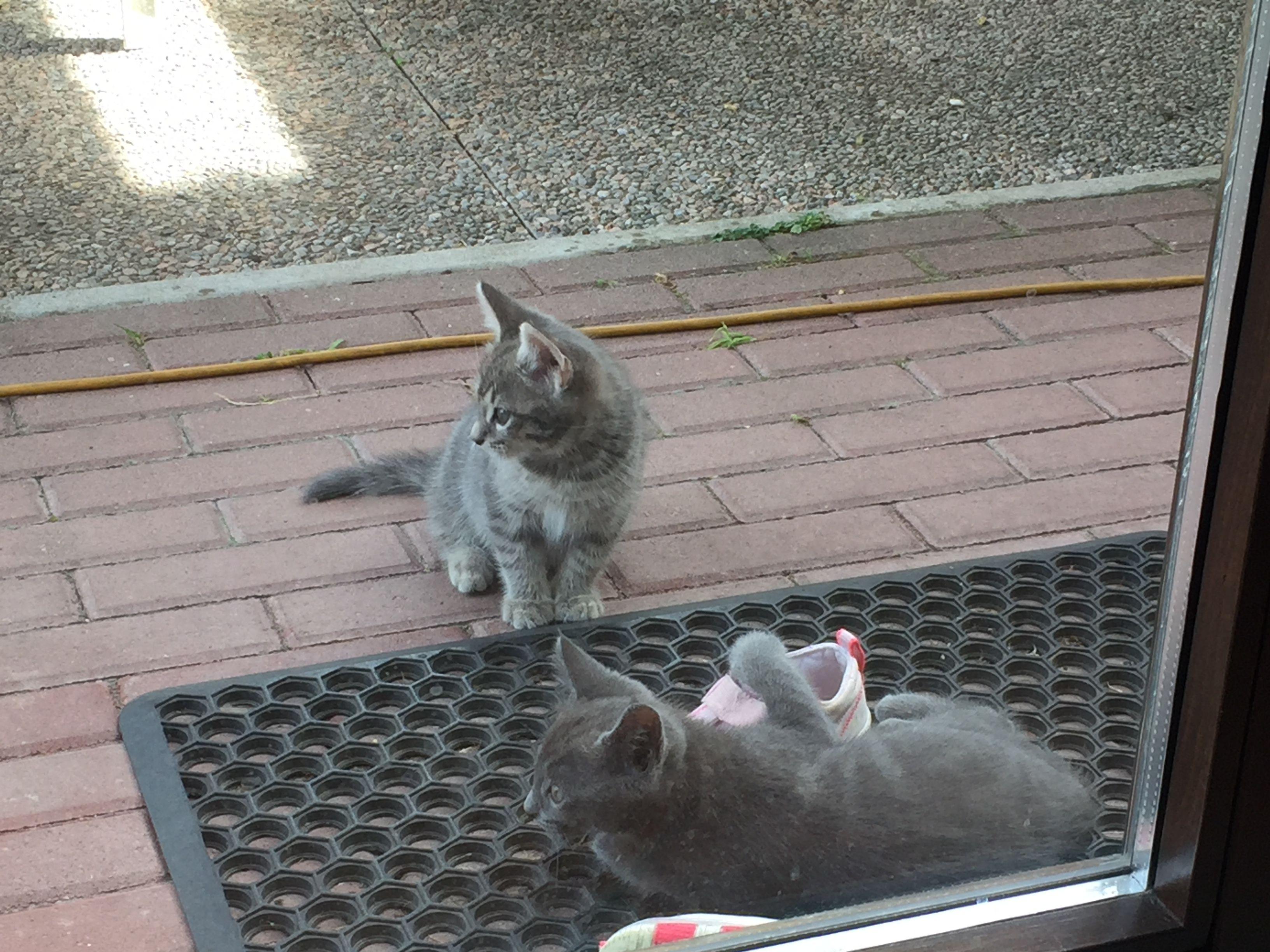 Varese REGALO GATTINI regalo gattini gatti varese Vai all\u0027