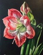 """Light of the world"", red and white amaryllis flower art, Original Acrylic Painting by Michelle C. East"