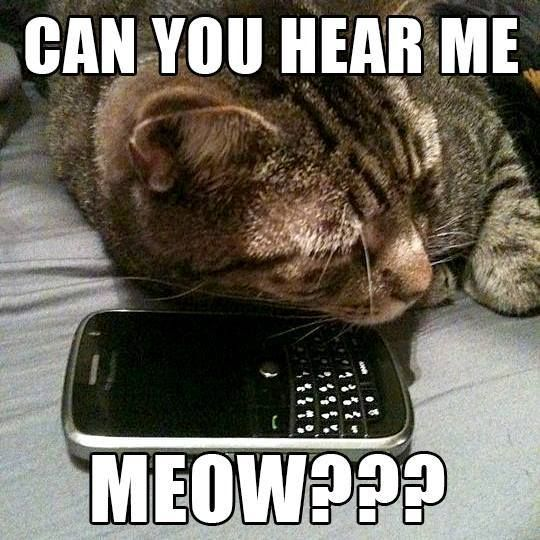 Can You Hear Me Meow Cats Cool Pets Cat Day