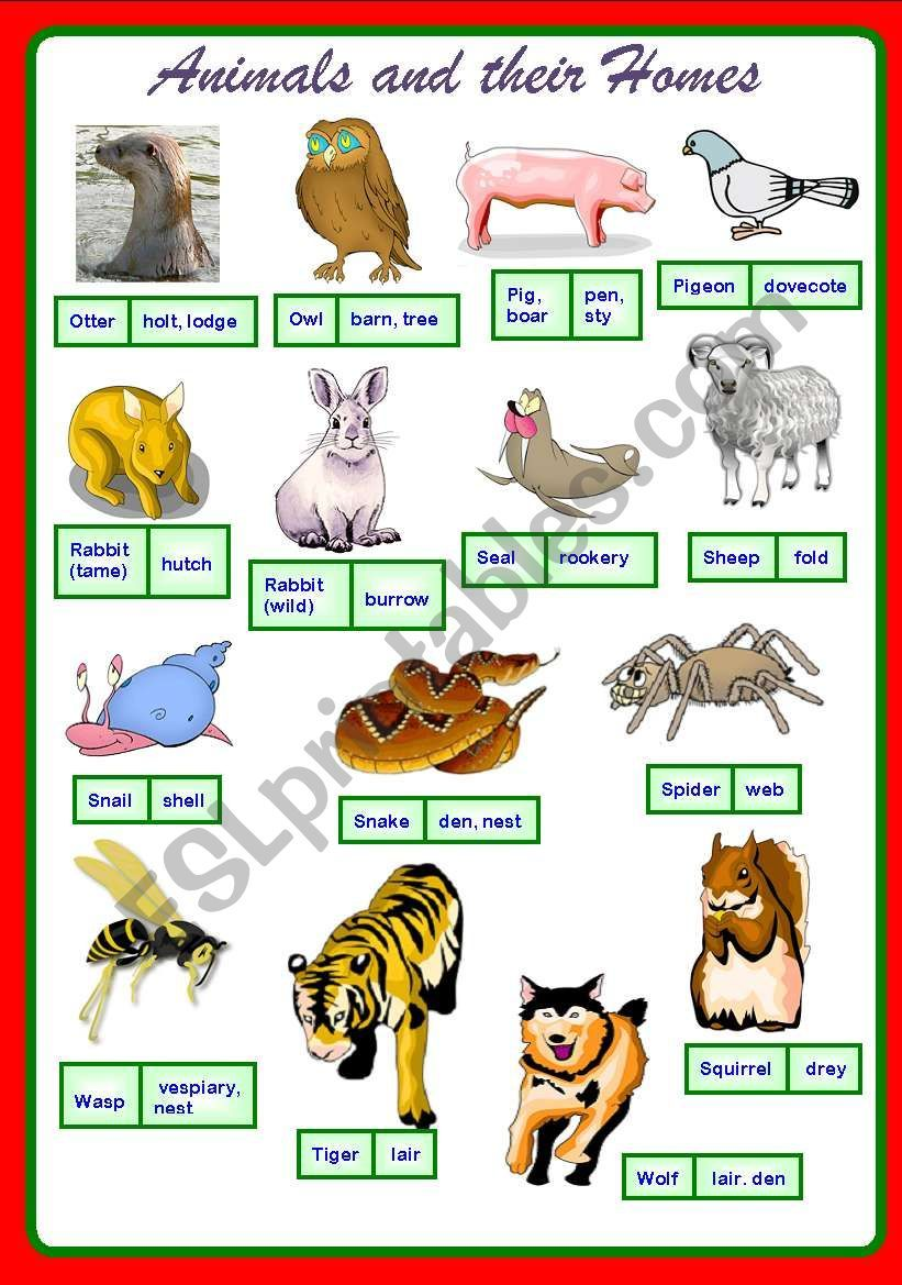 Poster On Animals And Their Homes Cheers Animals And Their Homes Animals List Of Animals