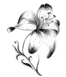 Stargazer Lily Tattoo Black And White Www Galleryhip Com The Lily Flower Tattoos Flower Tattoo Drawings Lily Tattoo