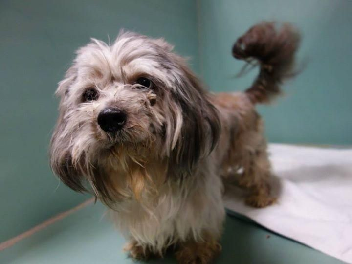 Petfinder Com Is The World S Largest Database Of Adoptable Pets