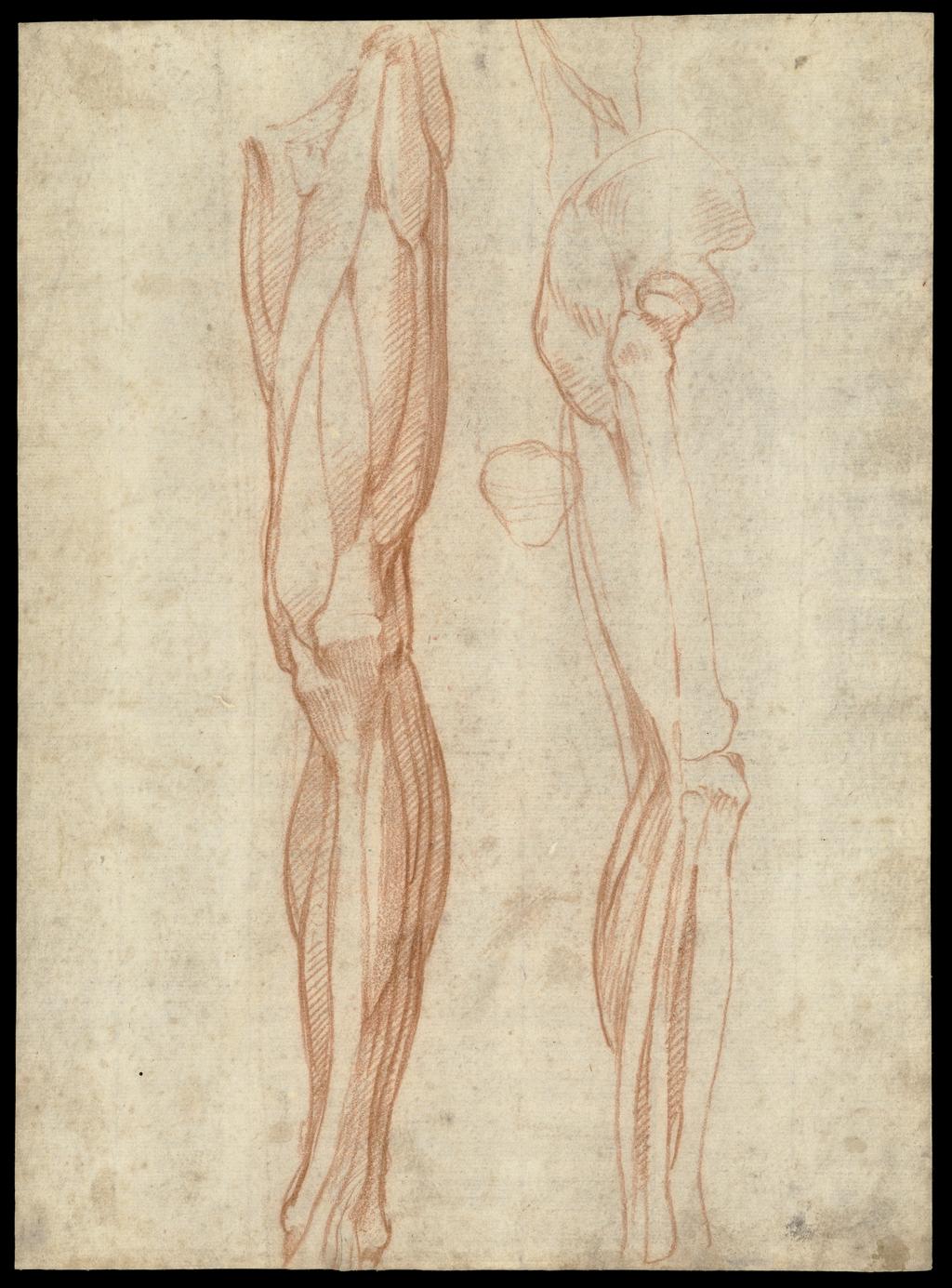 Los músculos de la pierna izquierda, vistos desde el frente, y los ...