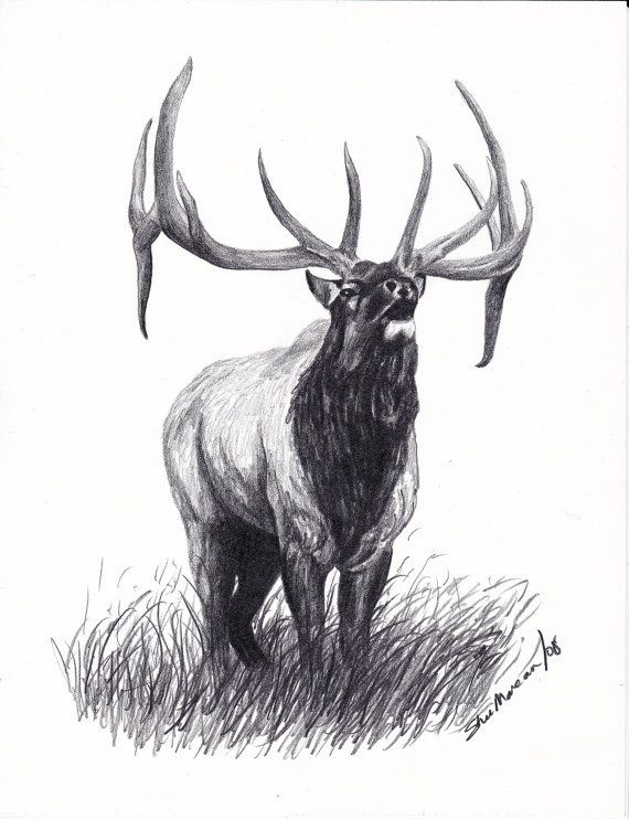 Elk bull elk limited edition print black by sherimareanartist 9 99