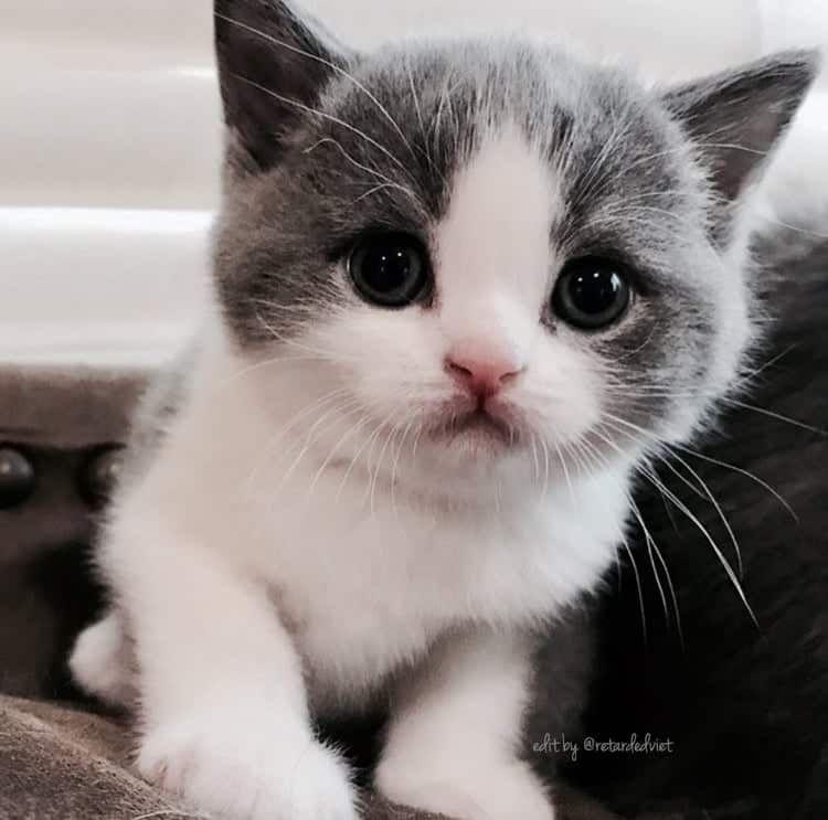 Kittten Baby Katzen Susse Tiere Niedliche Tierbabys