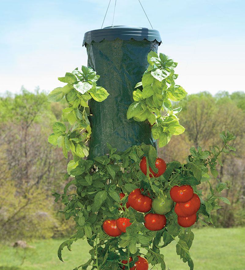 Hanging Tomato Planter With Mid Section Ports To Grow Your 400 x 300