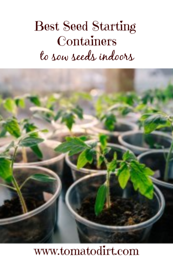 Containers To Use Grow Tomato Seeds