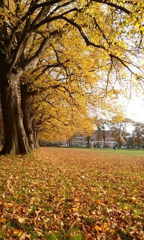 """""""Herfst"""" in Clingendael, Den Haag. Mijn eigen foto. 25-10-2015."""
