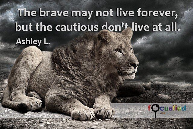"""Kết quả hình ảnh cho """"The brave may not live forever, but the cautious don't live at all."""" – Ashley L"""
