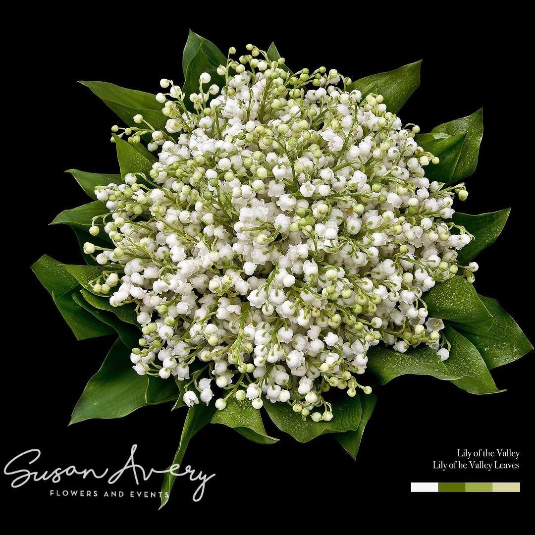 Happy mayday to you all if we were in france we would all be if we were in france we would all be giving each other lilyofthevalley one of my absolute favorite flowers stunning photo of our weddingbouquet by izmirmasajfo