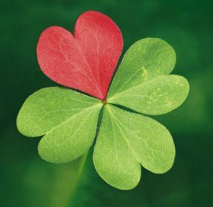 Friends Are Like Four Leaf Clovers Hard To Findbut Lucky Have