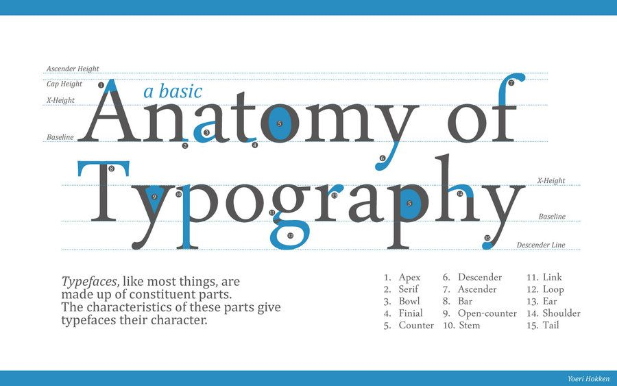 images about typography on pinterest   r  fonts  italic        images about typography on pinterest   r  fonts  italic font and anatomy