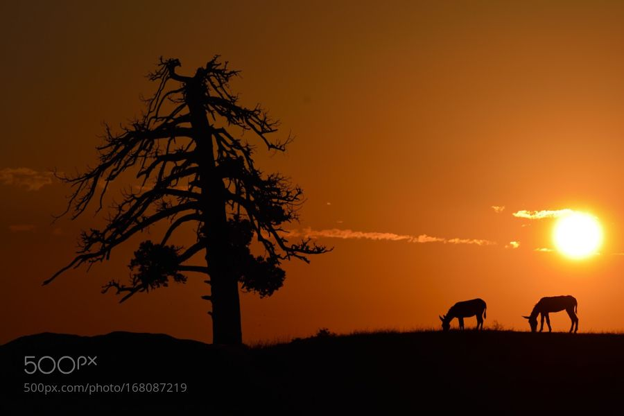 Silhouette by _oz_. Please Like http://fb.me/go4photos and Follow @go4fotos Thank You. :-)