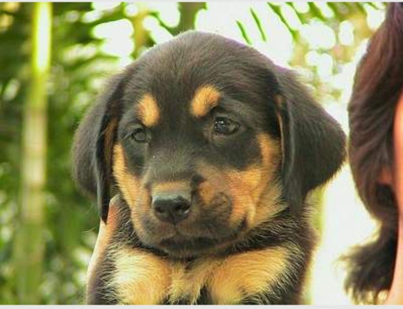 Identify The Crossbreed Puppy With Images Golden Retriever